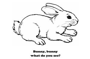 Bunny what do you see
